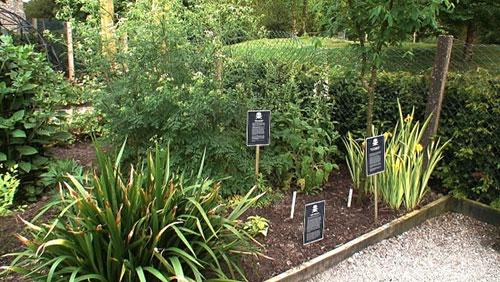 jardin venenos alnwick