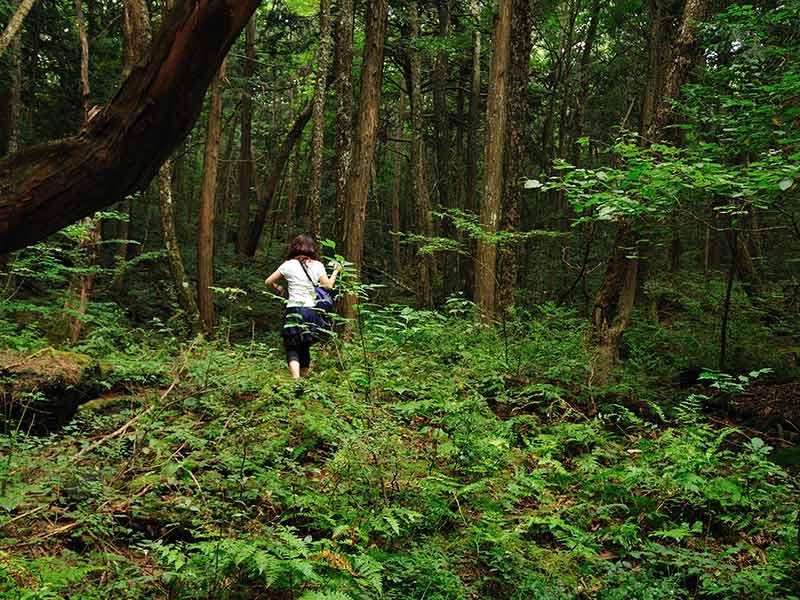 Foresta de aokigahara